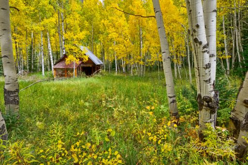 Cabin in the Aspens - Crystal, CO